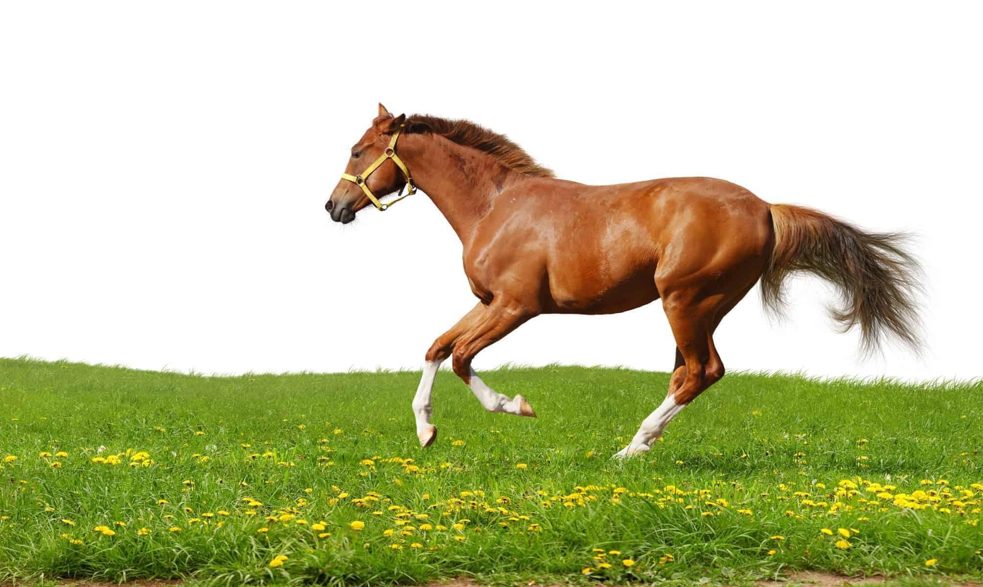 A short guide that helps to choose the right horse fence for any manage