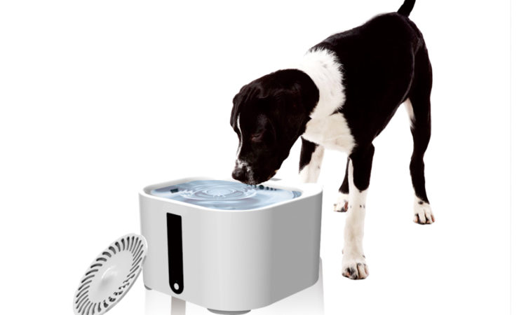 Be a Smart Pet Owner and Keep Your Dog Away From Allergies