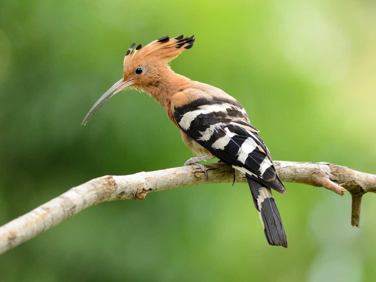Bird House - A Safe Home