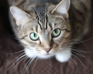 Cat Facts You Probably Didn't Know