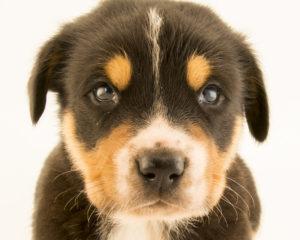 Dog Behavior in Dog Park