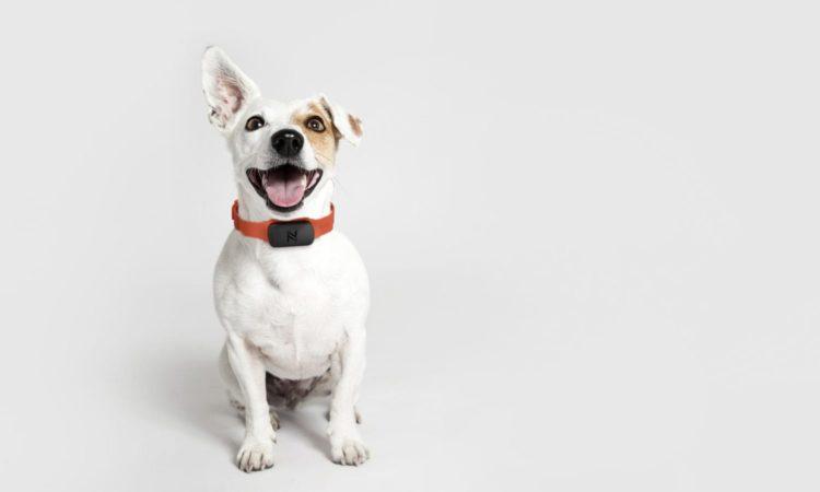 Dog Fashion Collar For A Stylish Pet