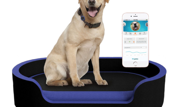 Dog Health Insurance - Finding Smart Pet Plans For Life