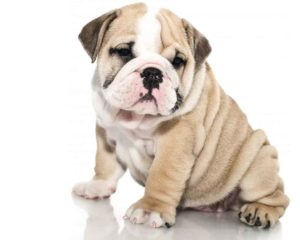 Give The Best Care To Your Precious Dogs With Our Dog Daycare San Marcos