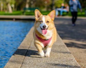 Improve Beauty of Your Pet With Dog Grooming in Lafayette