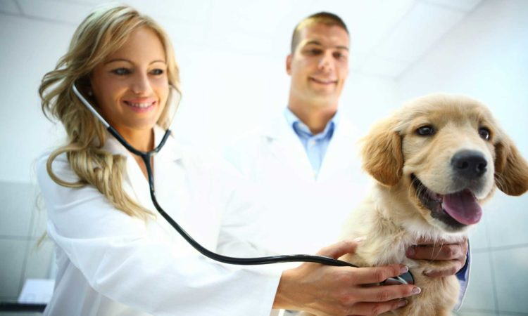 Main Reasons to Visit The Vet