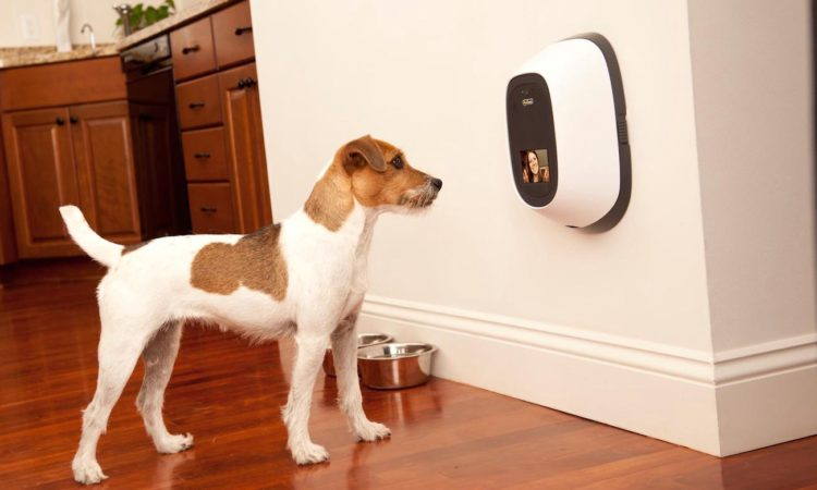 Pet Door - It is an Automatic Gate Keeper For Your Cat!