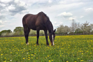 Protects Your Horses From Flies And Other Type of Insects