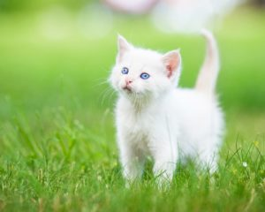 Reasons For Giving Your Pet Dry Cat Food