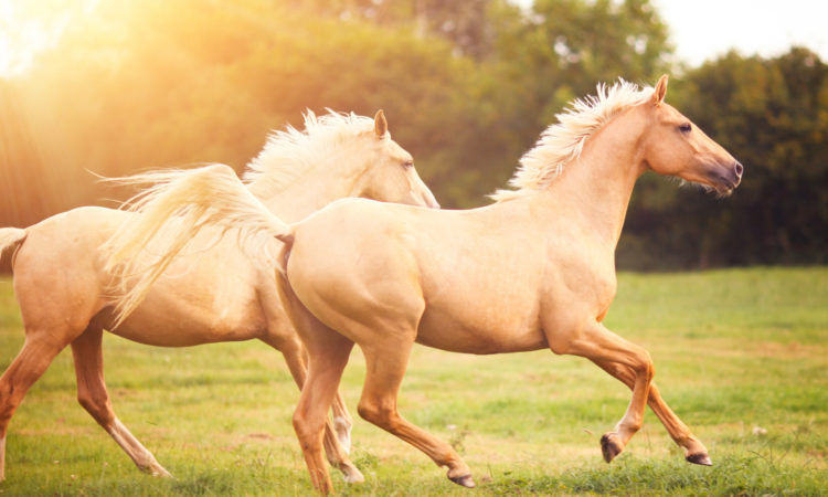 Reasons to Consider Horse Ranch Vacation For Your Next Adventure Trip