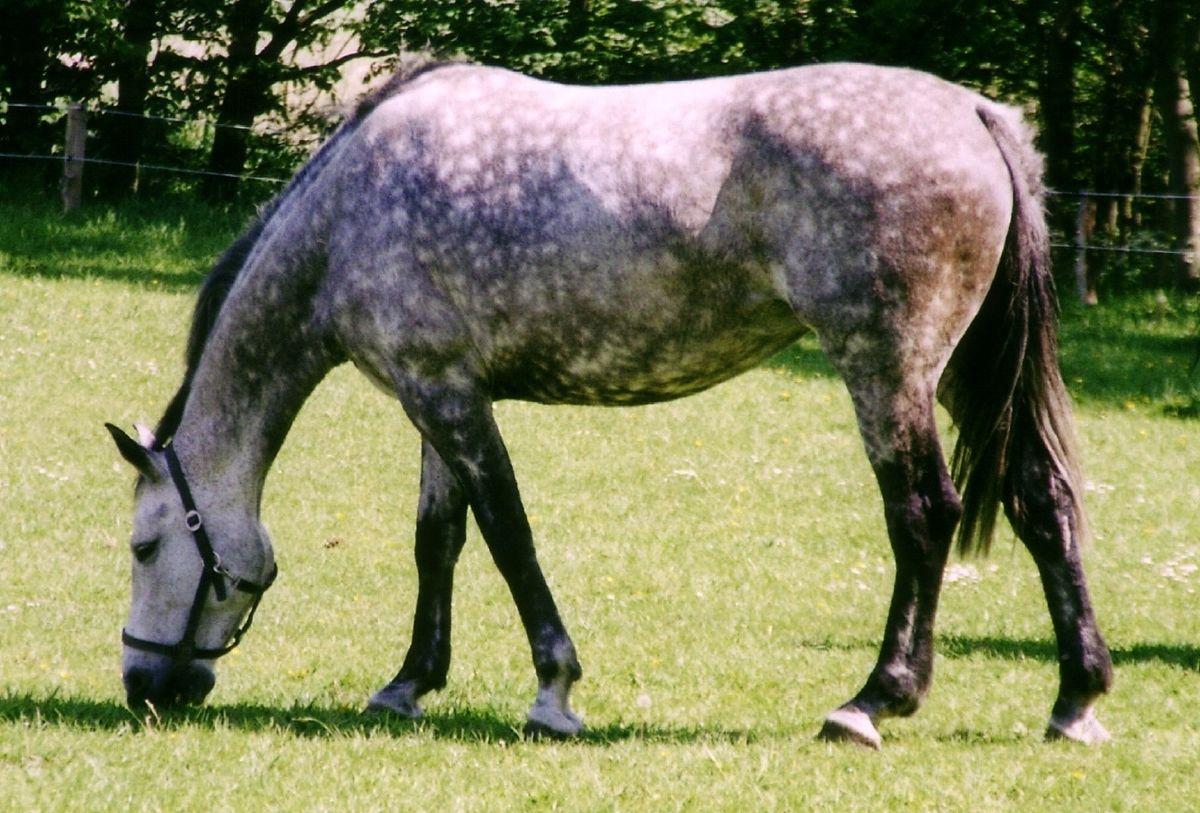 Reputable Rehab Facilities- Providing Ideal Treatment for Horse Suspensory Injury