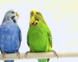The Necessity of Bird Toys