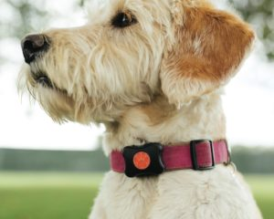The Smart Pet Owner's Guide to Preventing Canine Urine Problems