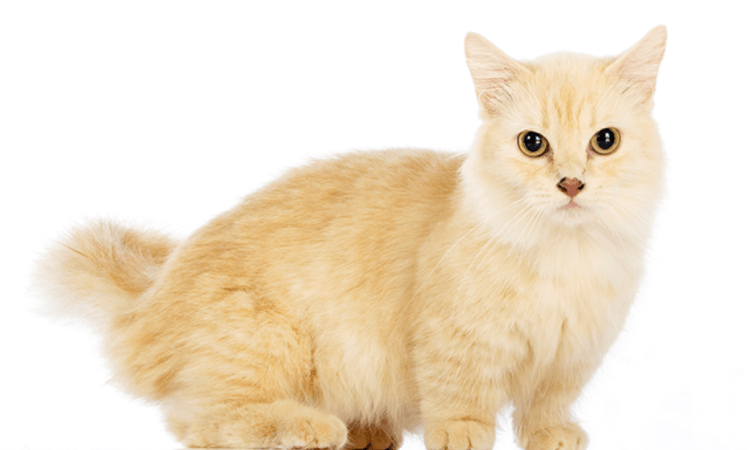 What You Should Know About Cats Before Getting One Home